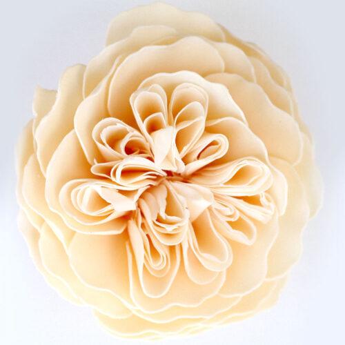 Sweet Life Garden Rose