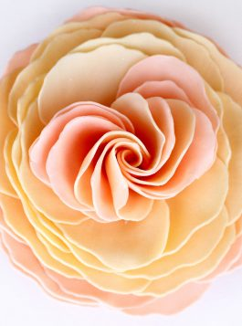 Juliet's Dream Garden Rose Sunset