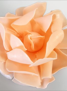 Juliet's Dream Tea Rose