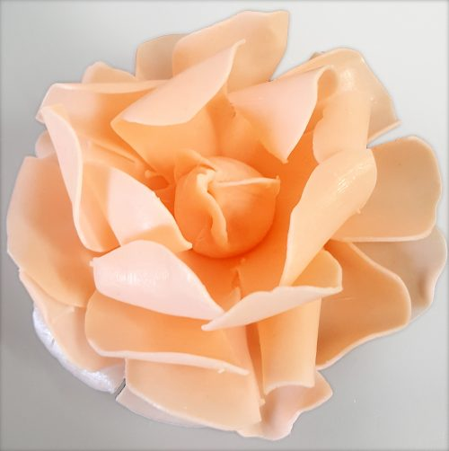 Juliet's Dream Tea Rose