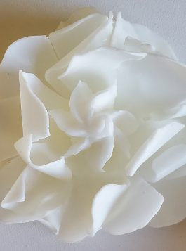 Graceful Day Gardenia