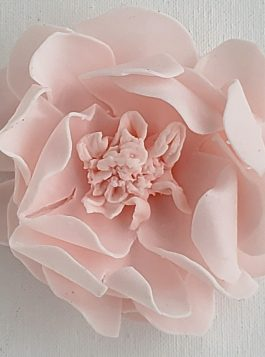 Sweet Blush Garden Rose